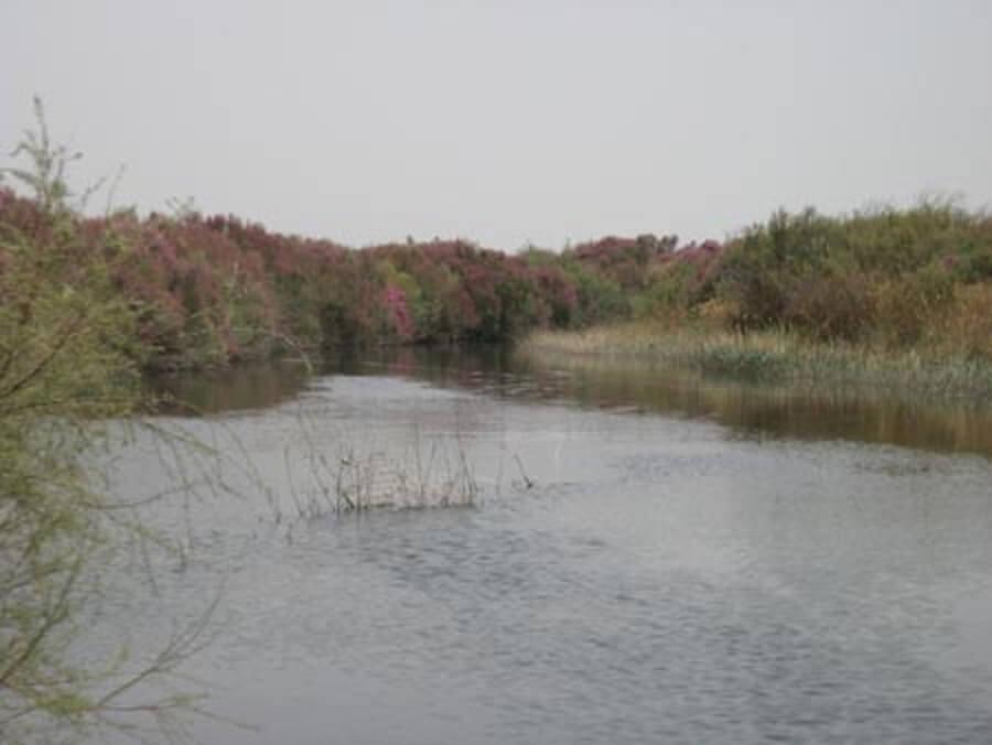 ZENDEH ROOD 31 - زاینده رود در ورزنه