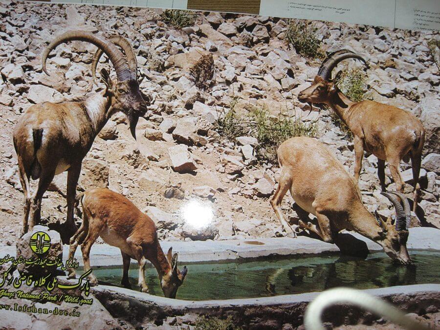 پارک ملی حیات وحش کلاه قاضی