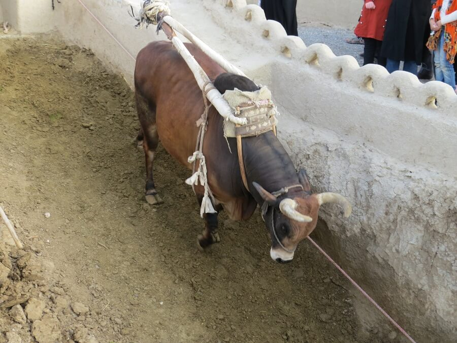 well cow 2 - گاوچاه