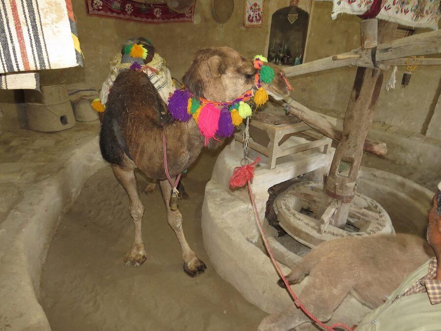 Camel mill 2 - آسیاب شتر ورزنه