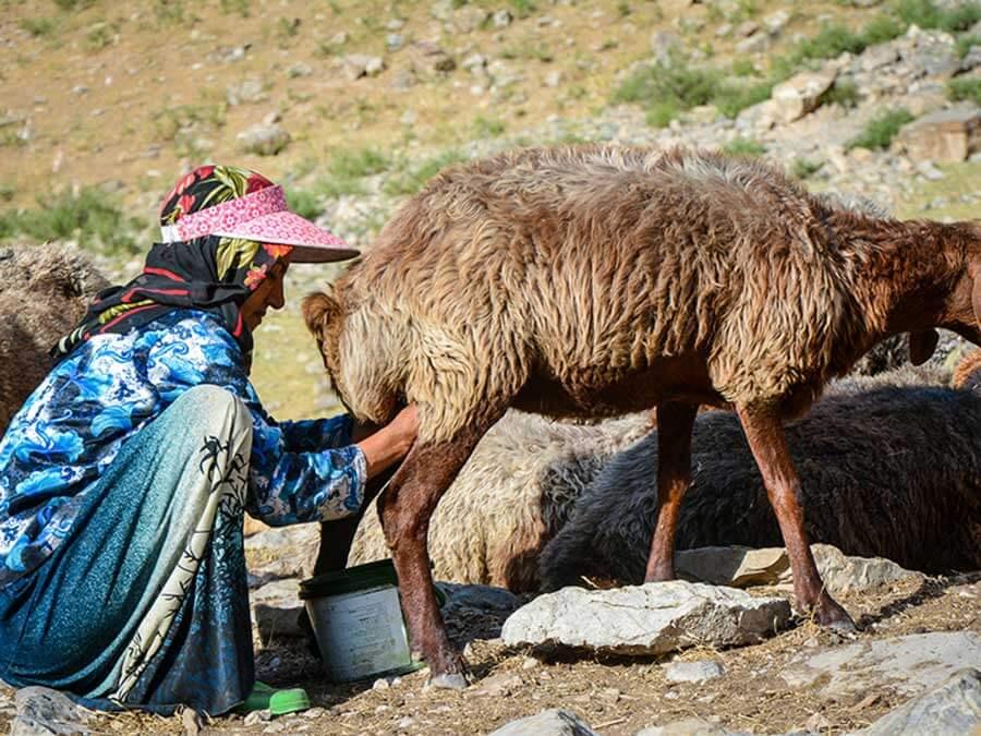 عشایر نصر آباد جرقویه