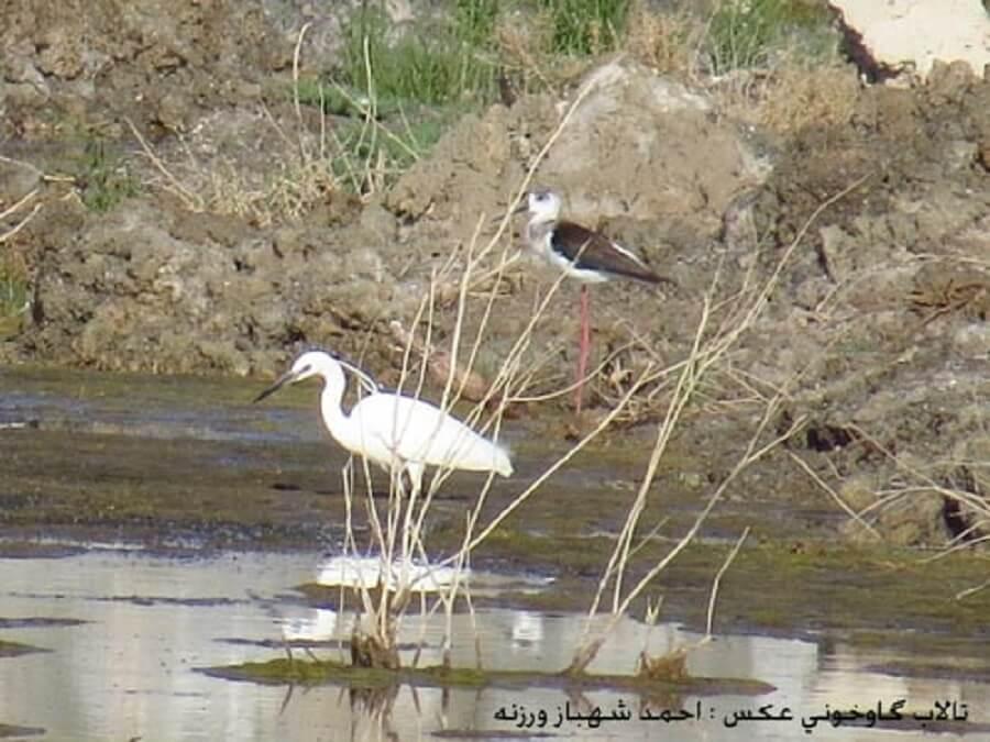 bird talab 1 - پرندگان تالاب گاوخونی