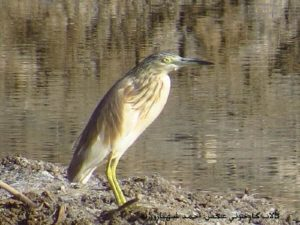 bird talab 4 300x225 - صفحه اصلی